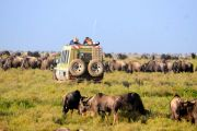 Tanzania Safaris: Options 1
